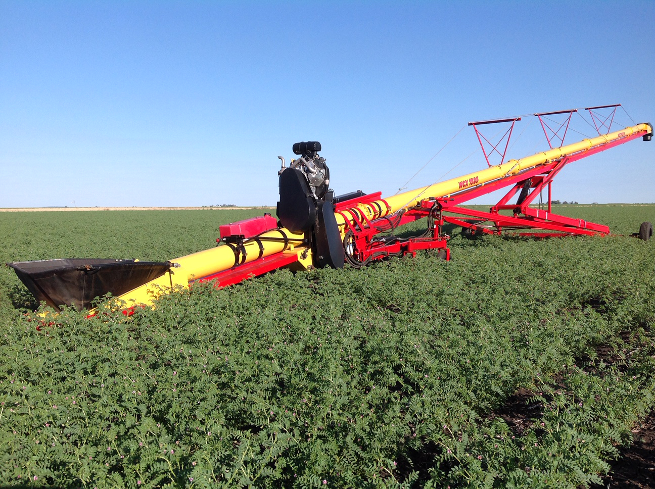 WCX Conveyor Field of Chick Peas_IMG